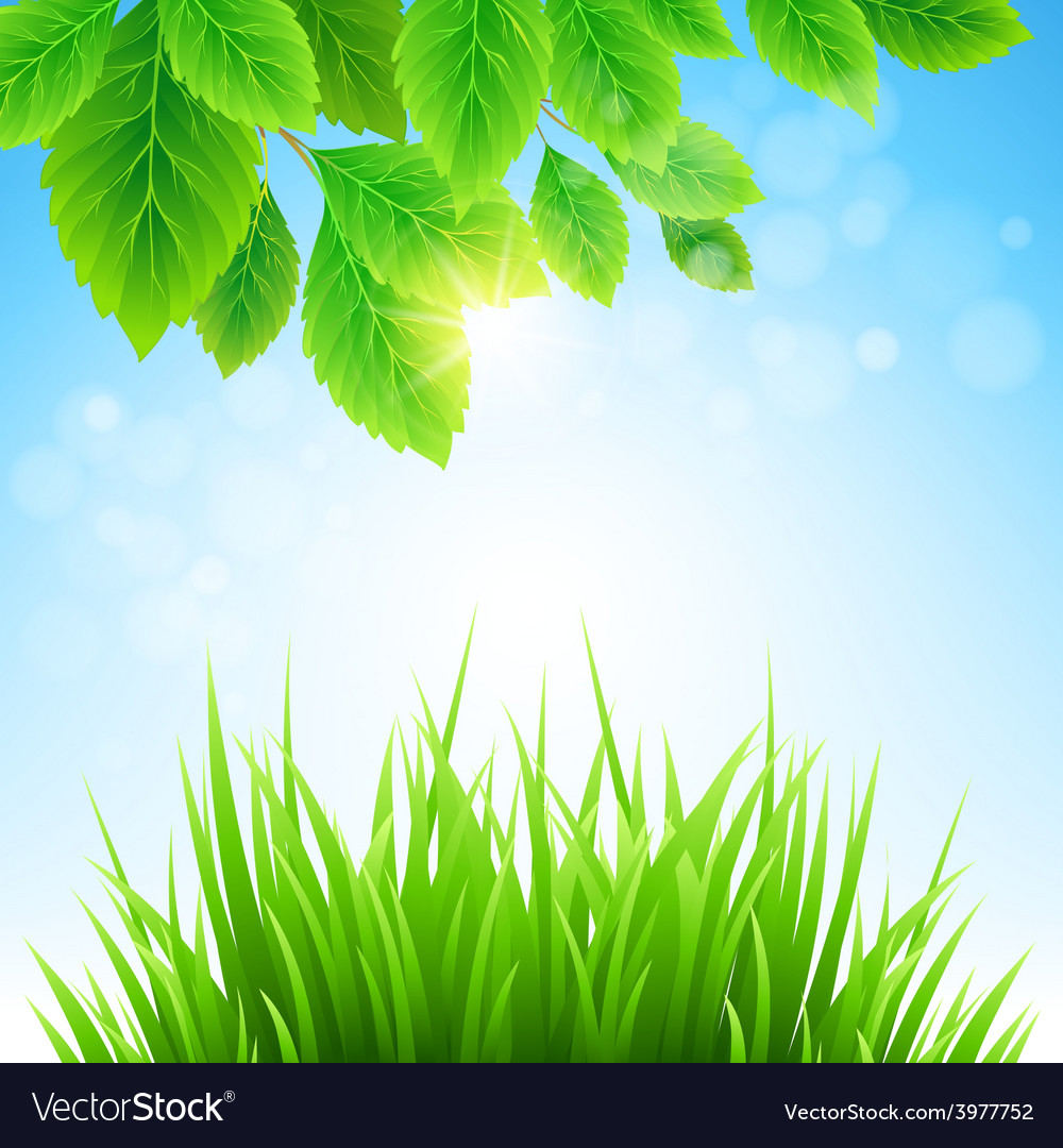 Clean spring amazing scenery vector | Price: 1 Credit (USD $1)