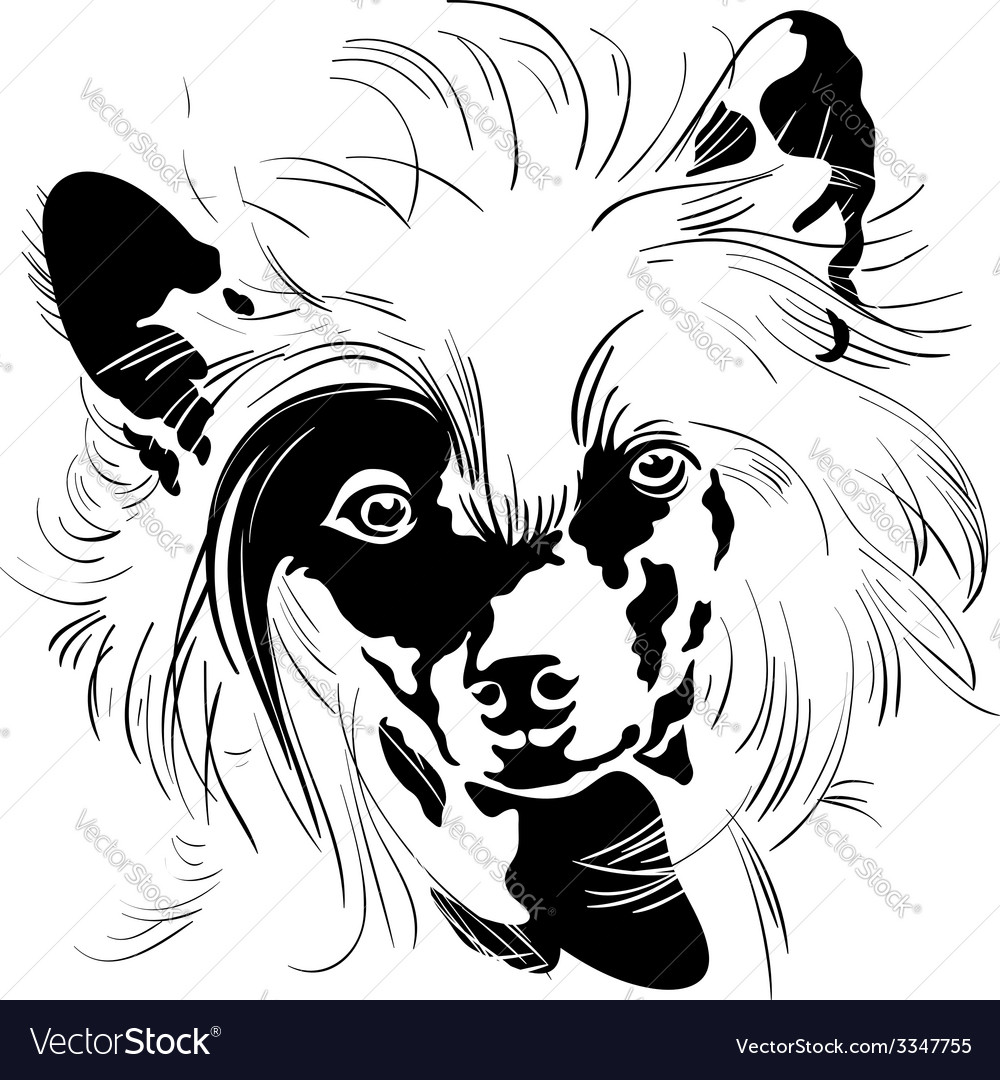 Sweet dog chinese crested breed hand drawing vector | Price: 1 Credit (USD $1)