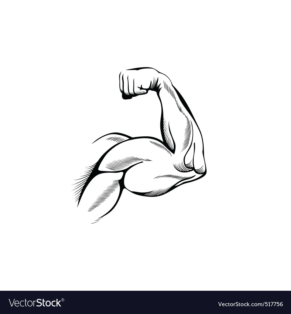 Arm muscles vector | Price: 1 Credit (USD $1)
