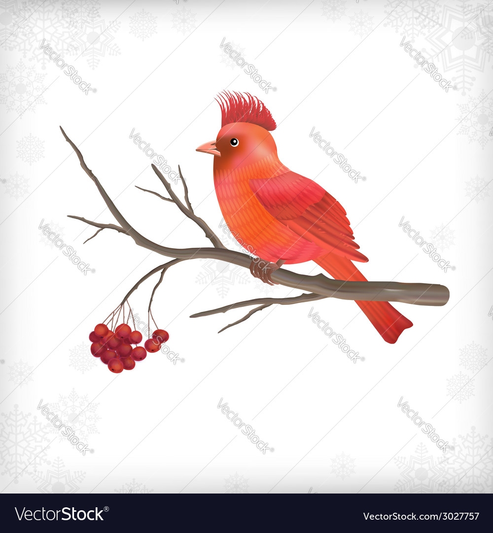 Winter christmas bird rowan tree branches vector | Price: 1 Credit (USD $1)