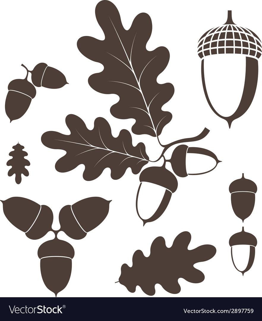 Oak acorn vector | Price: 1 Credit (USD $1)