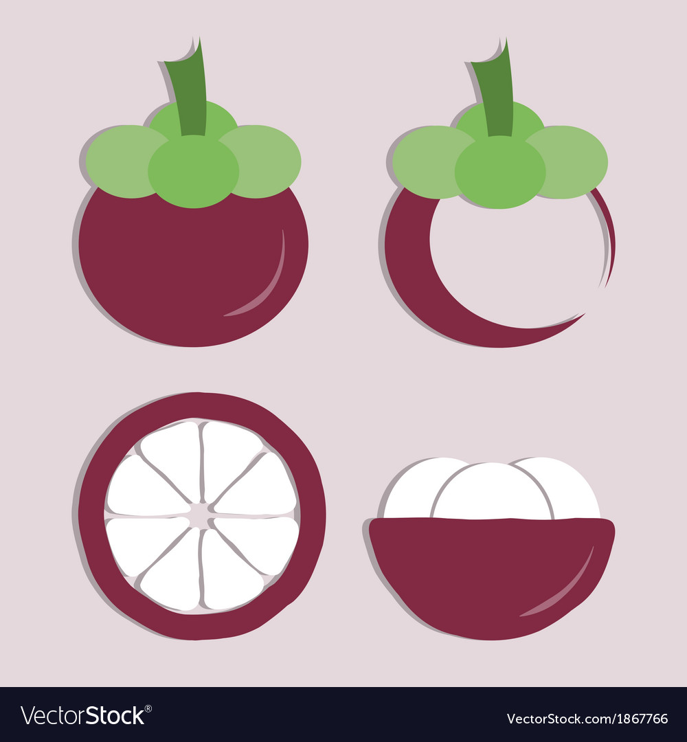 Set of mangosteen icon vector | Price: 1 Credit (USD $1)