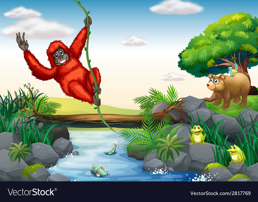 Orangutan and river vector | Price: 3 Credit (USD $3)