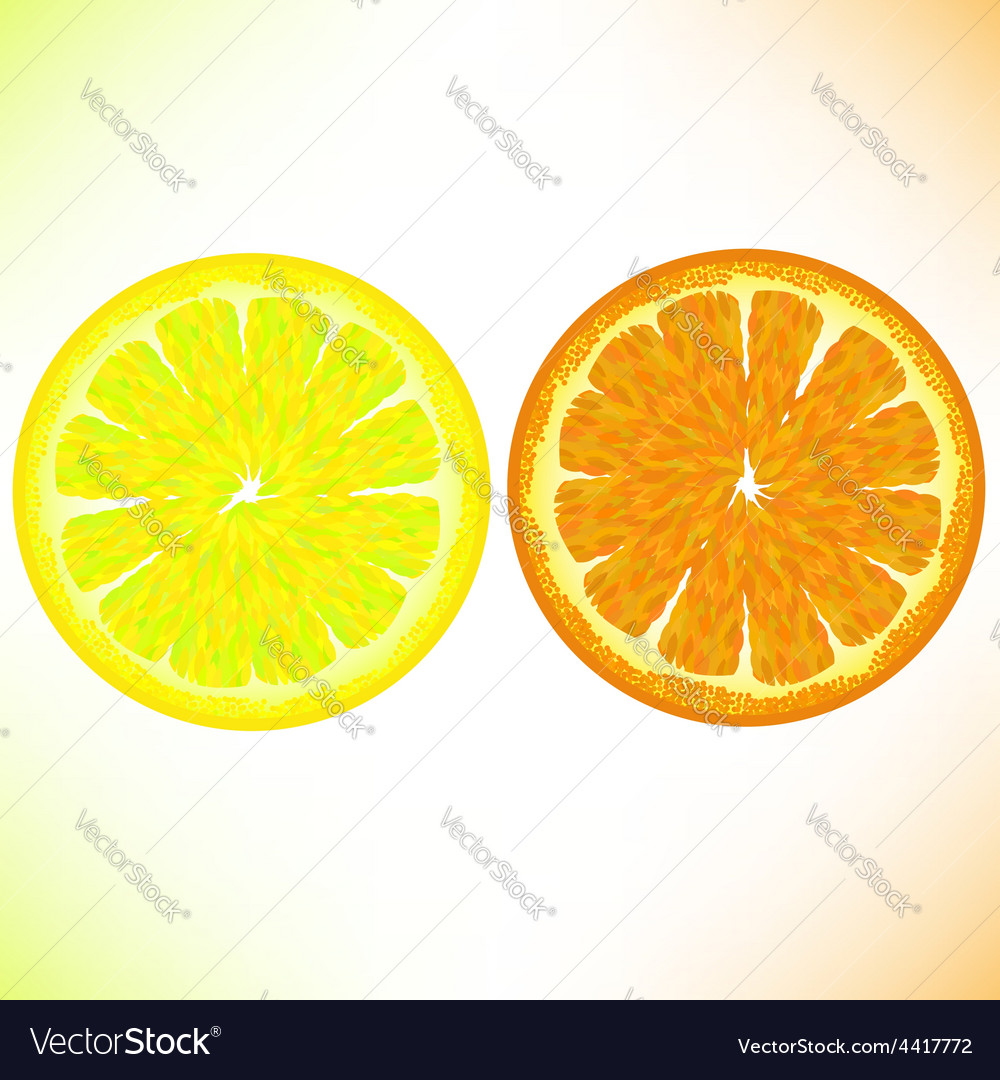 Lemon and orange vector | Price: 1 Credit (USD $1)