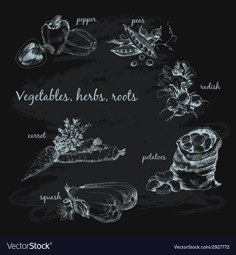 Vegetables herb and roots vector   Price: 1 Credit (USD $1)