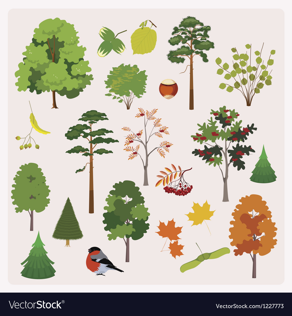 Forest collection vector | Price: 1 Credit (USD $1)