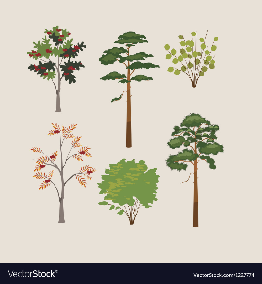 Forest trees and bushes vector | Price: 1 Credit (USD $1)