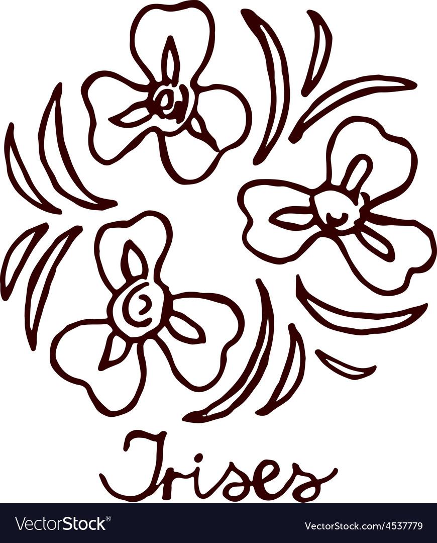 Handsketched bouquet of irises vector   Price: 1 Credit (USD $1)