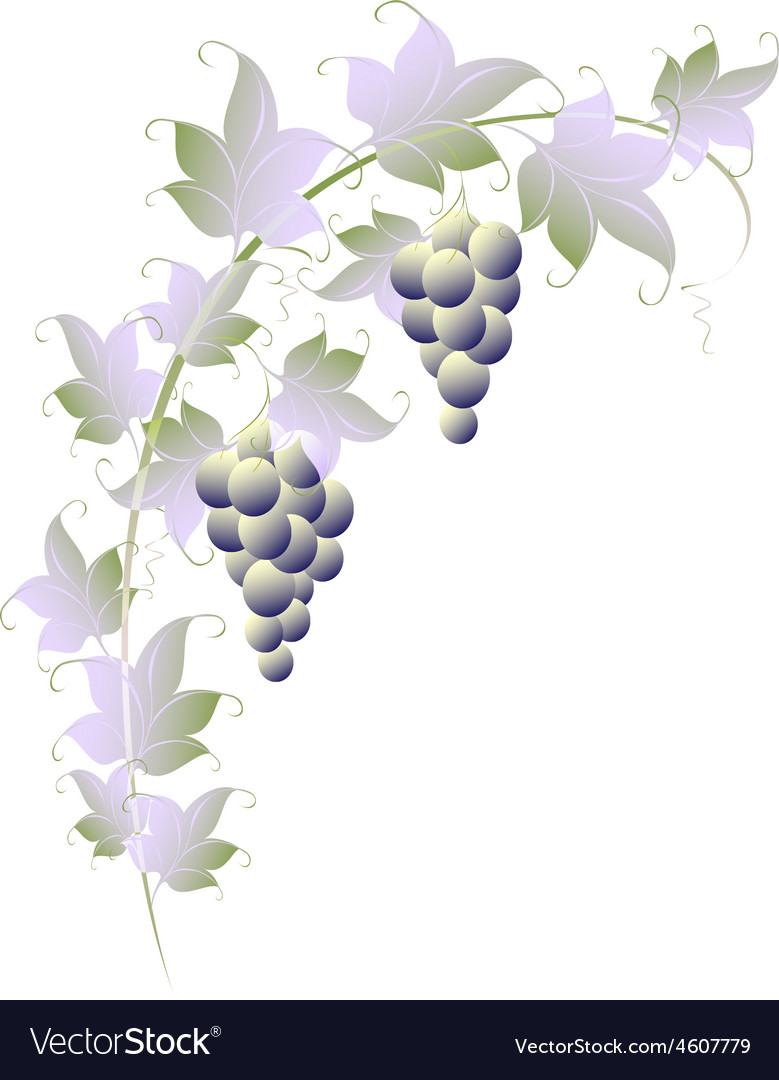 Pattern of vines for page decoration eps10 vector | Price: 1 Credit (USD $1)