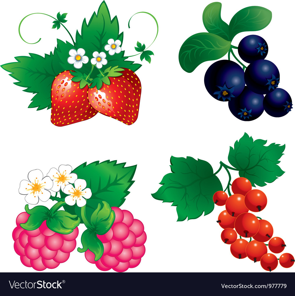 Set of berry vector | Price: 3 Credit (USD $3)