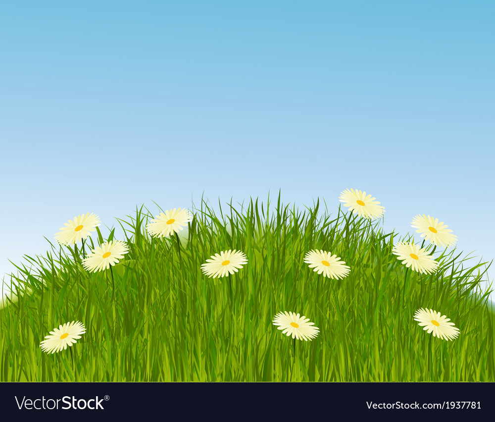 Meadow grass vector | Price: 1 Credit (USD $1)
