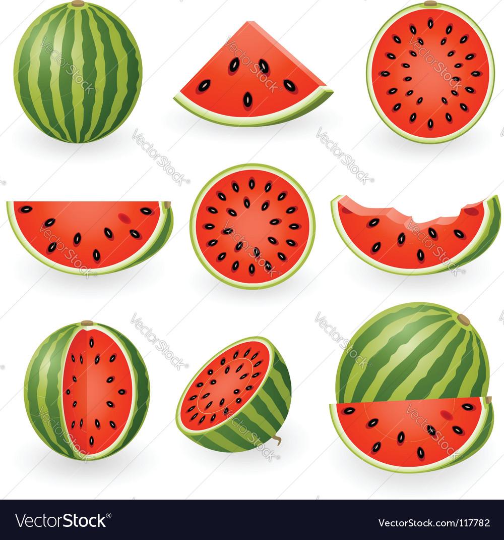 Watermelon vector | Price: 1 Credit (USD $1)