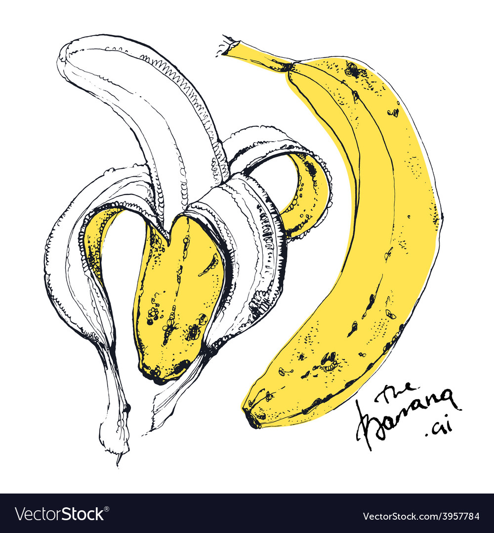 Ink drawn of banana fruit vector | Price: 1 Credit (USD $1)