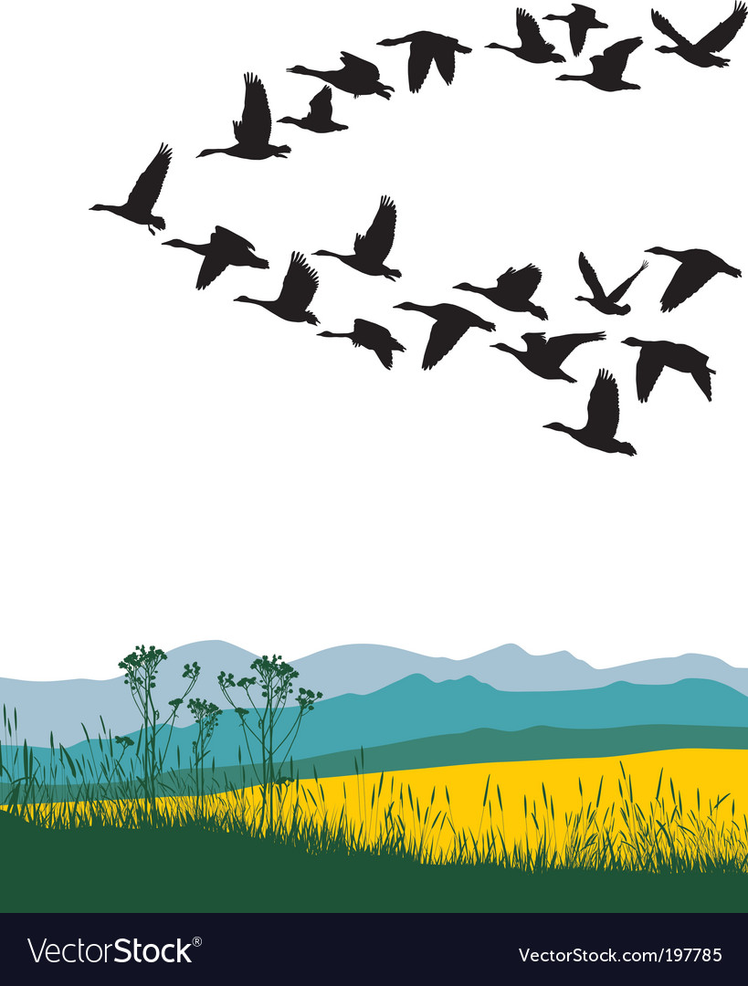 Migrating geese in the spring vector | Price: 1 Credit (USD $1)