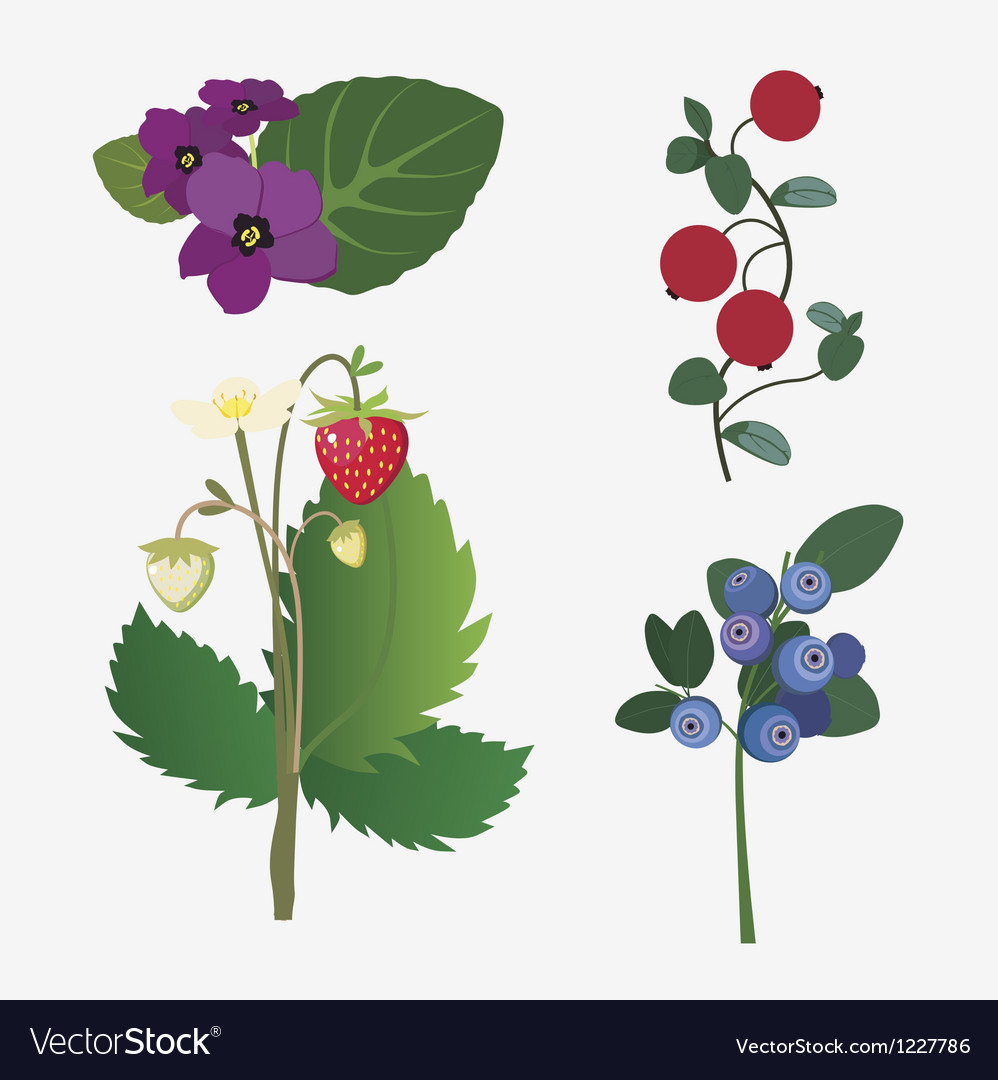 Wild berries and flowers vector | Price: 1 Credit (USD $1)