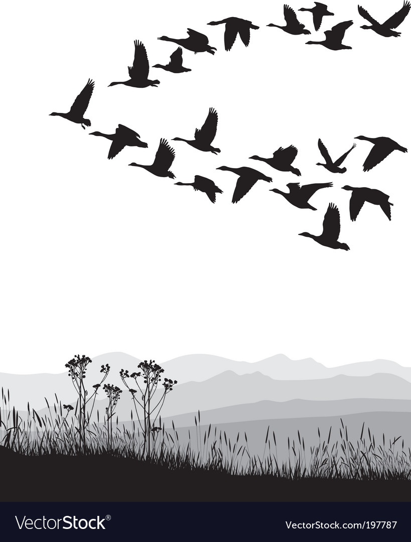 Migrating geese vector | Price: 1 Credit (USD $1)