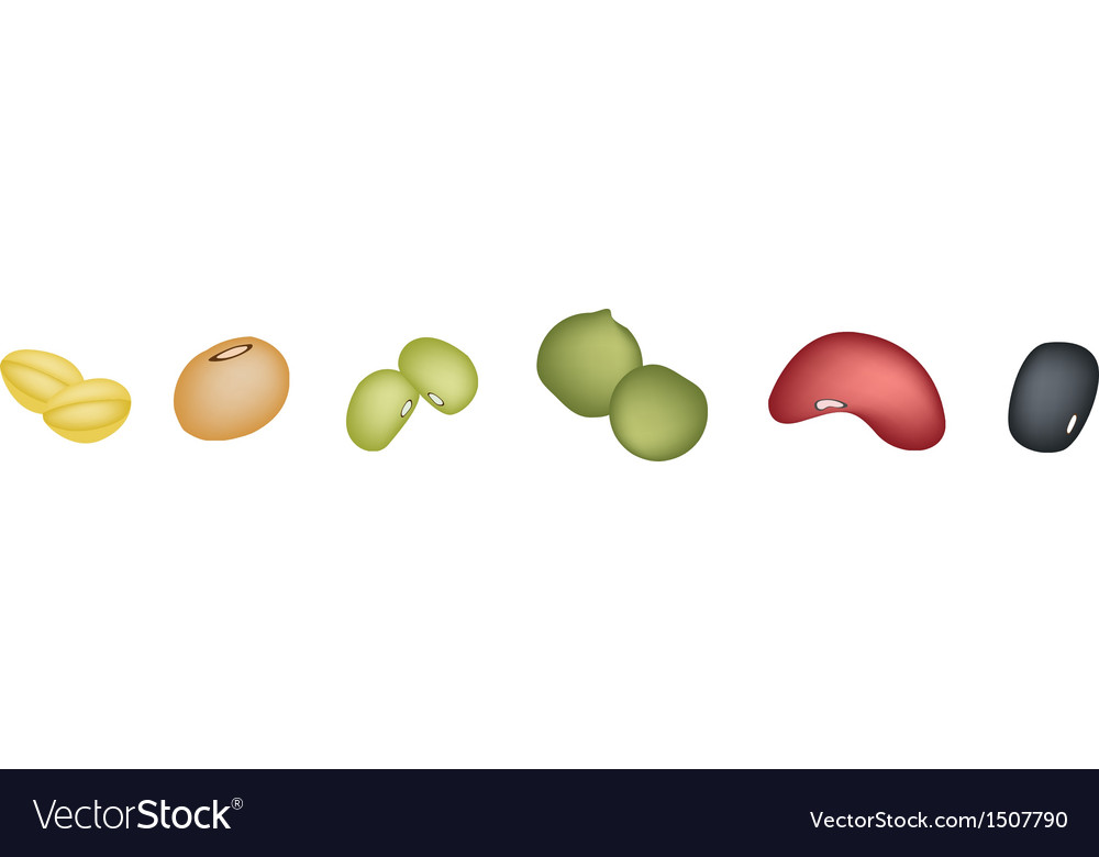 Different beans banner vector | Price: 1 Credit (USD $1)