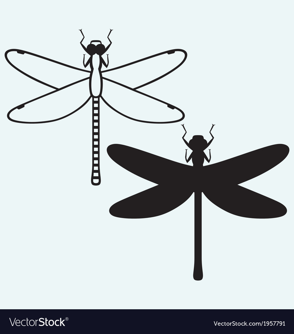 Dragonfly anax imperator vector | Price: 1 Credit (USD $1)