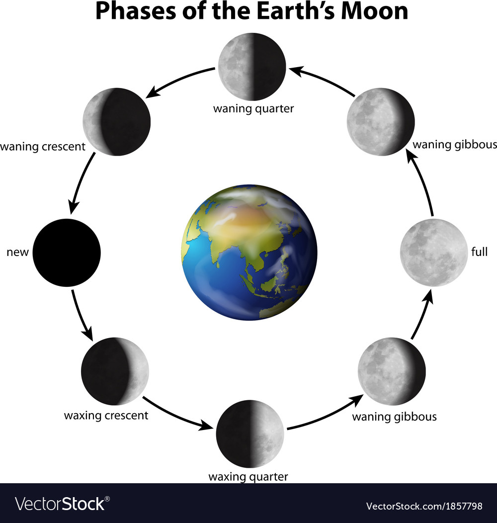 Phases of the moon vector | Price: 1 Credit (USD $1)