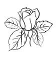 Blooming roses vector