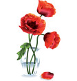 Flower poppy vector
