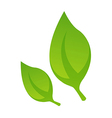 Icon leaf vector