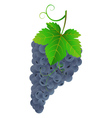 Tasty dark grape vector