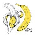 Ink drawn of banana fruit vector