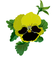 Yellow pansy flower with leaves and bud vector