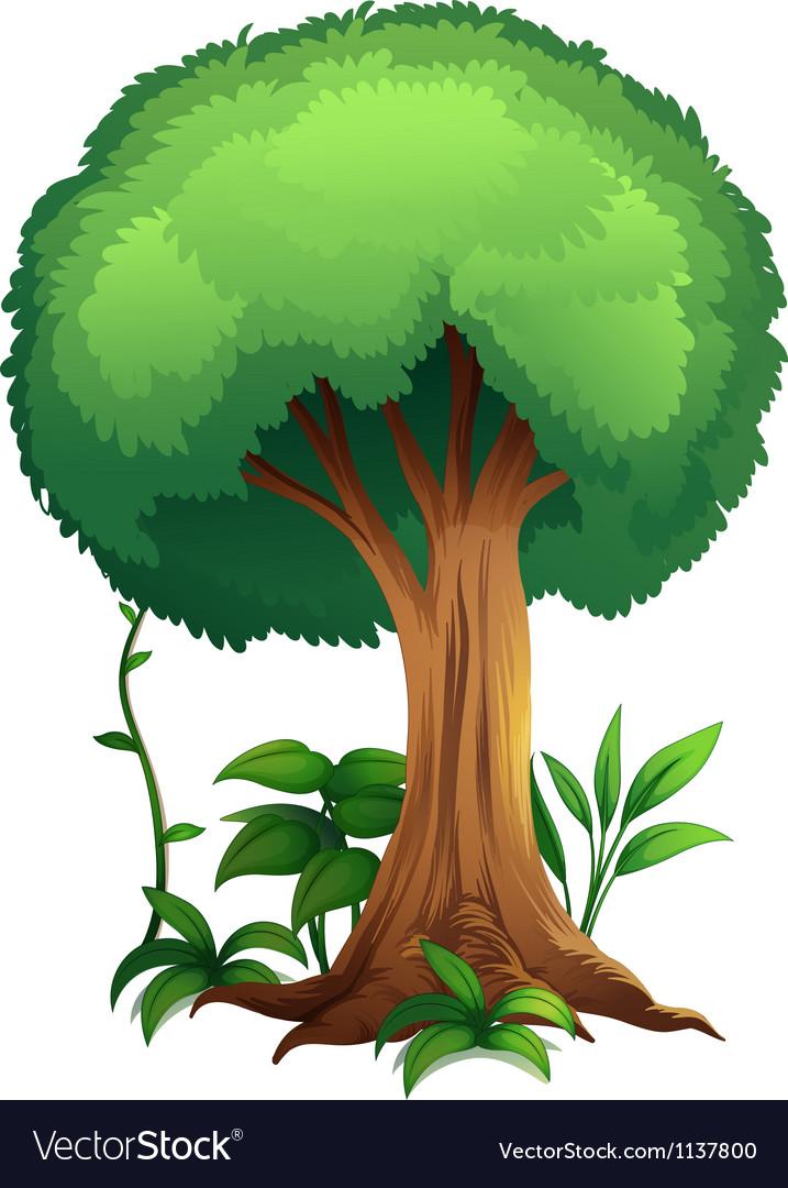 A tree vector | Price: 1 Credit (USD $1)