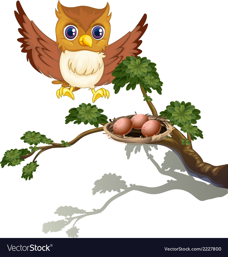 An owl watching the eggs at the branch of a tree vector | Price: 1 Credit (USD $1)