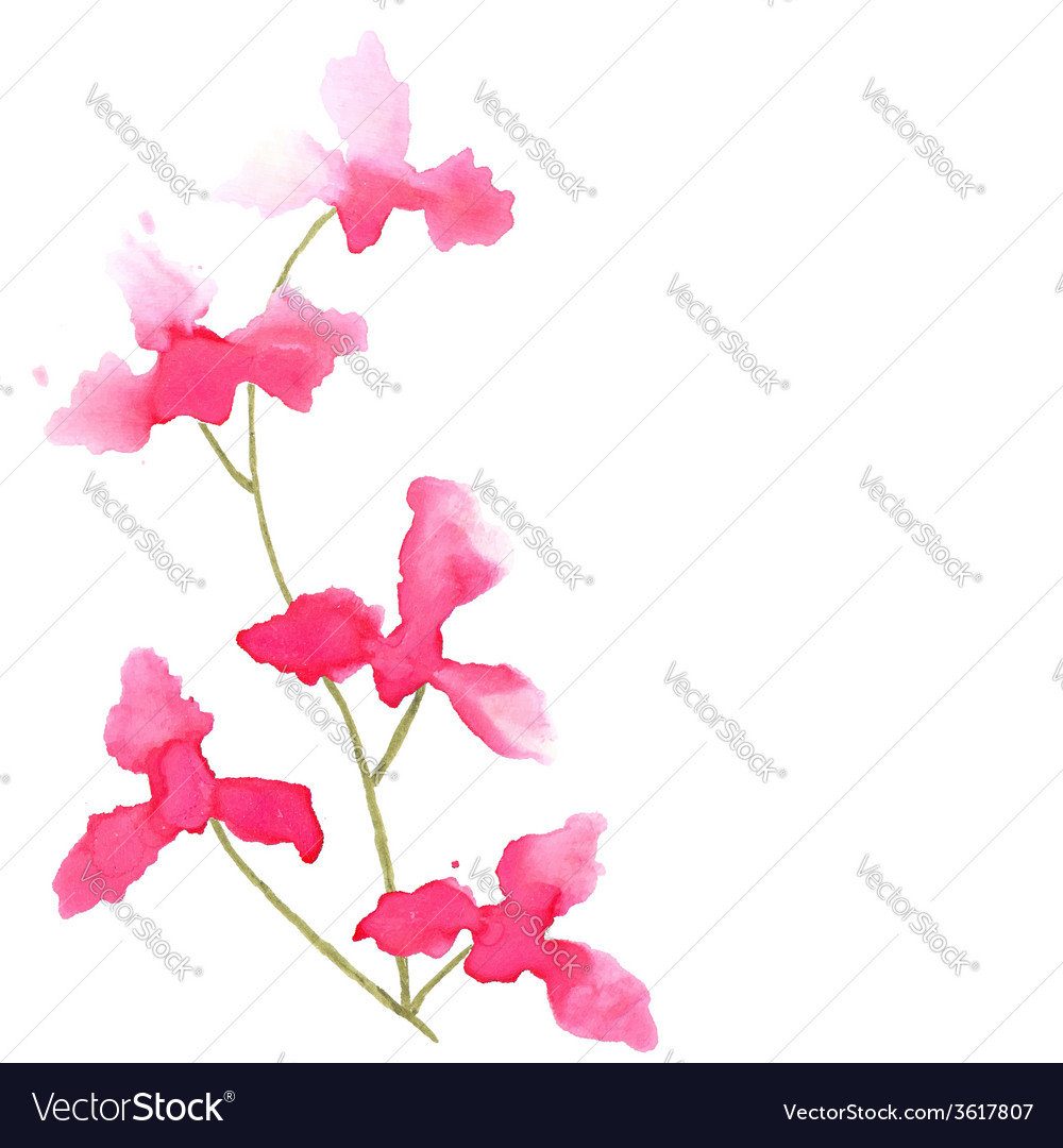 Branch with orchid flowers vector | Price: 1 Credit (USD $1)