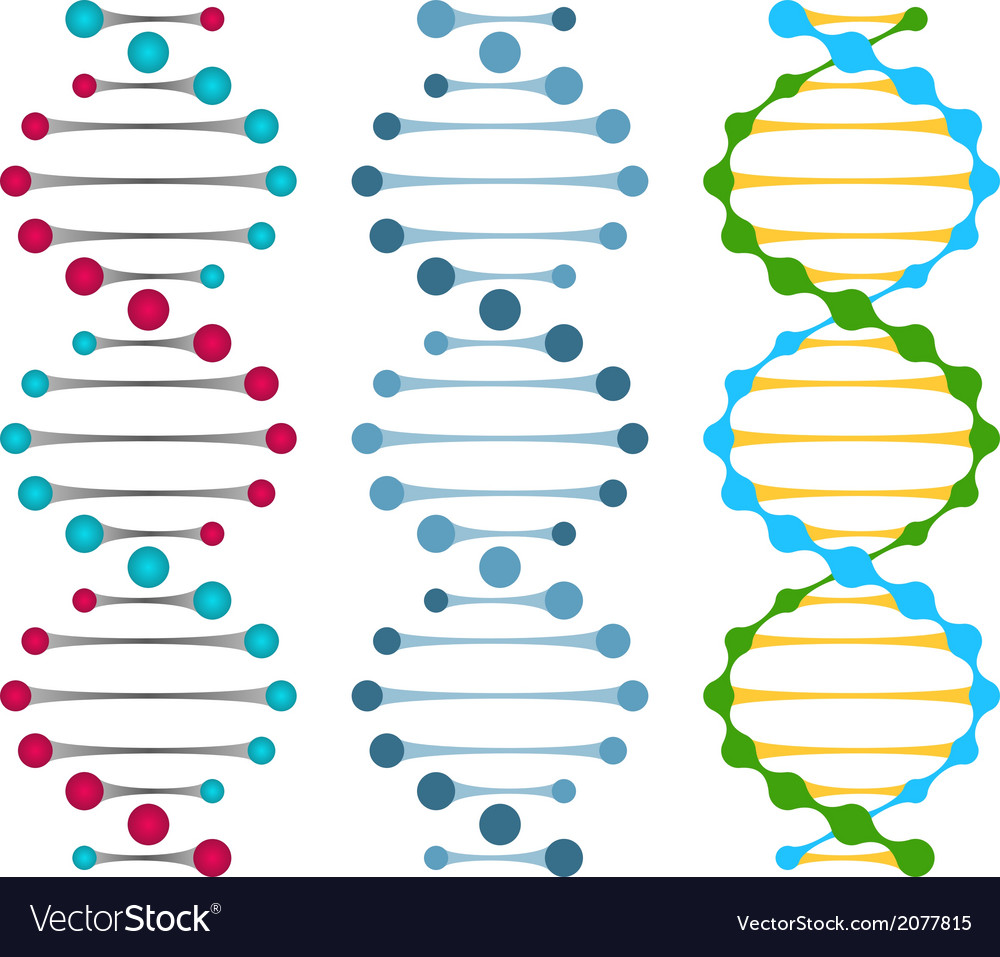 Three variants of double strand dna molecules vector | Price: 1 Credit (USD $1)