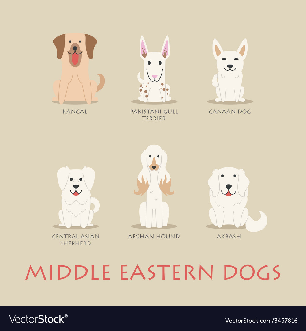 Set of middle eastern dogs vector | Price: 1 Credit (USD $1)