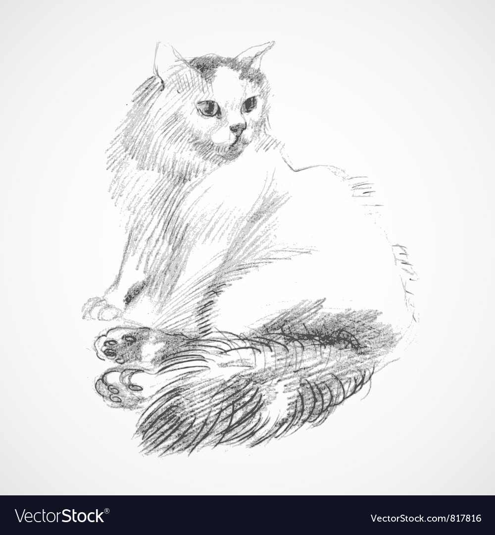 Sketch of cat vector | Price: 1 Credit (USD $1)