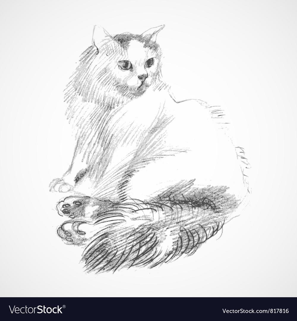 Sketch of cat vector | Price: 1 Credit (USD $1)