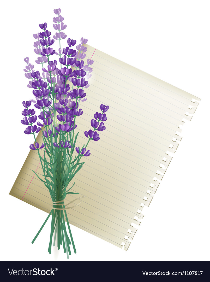 Lavender vector | Price: 1 Credit (USD $1)