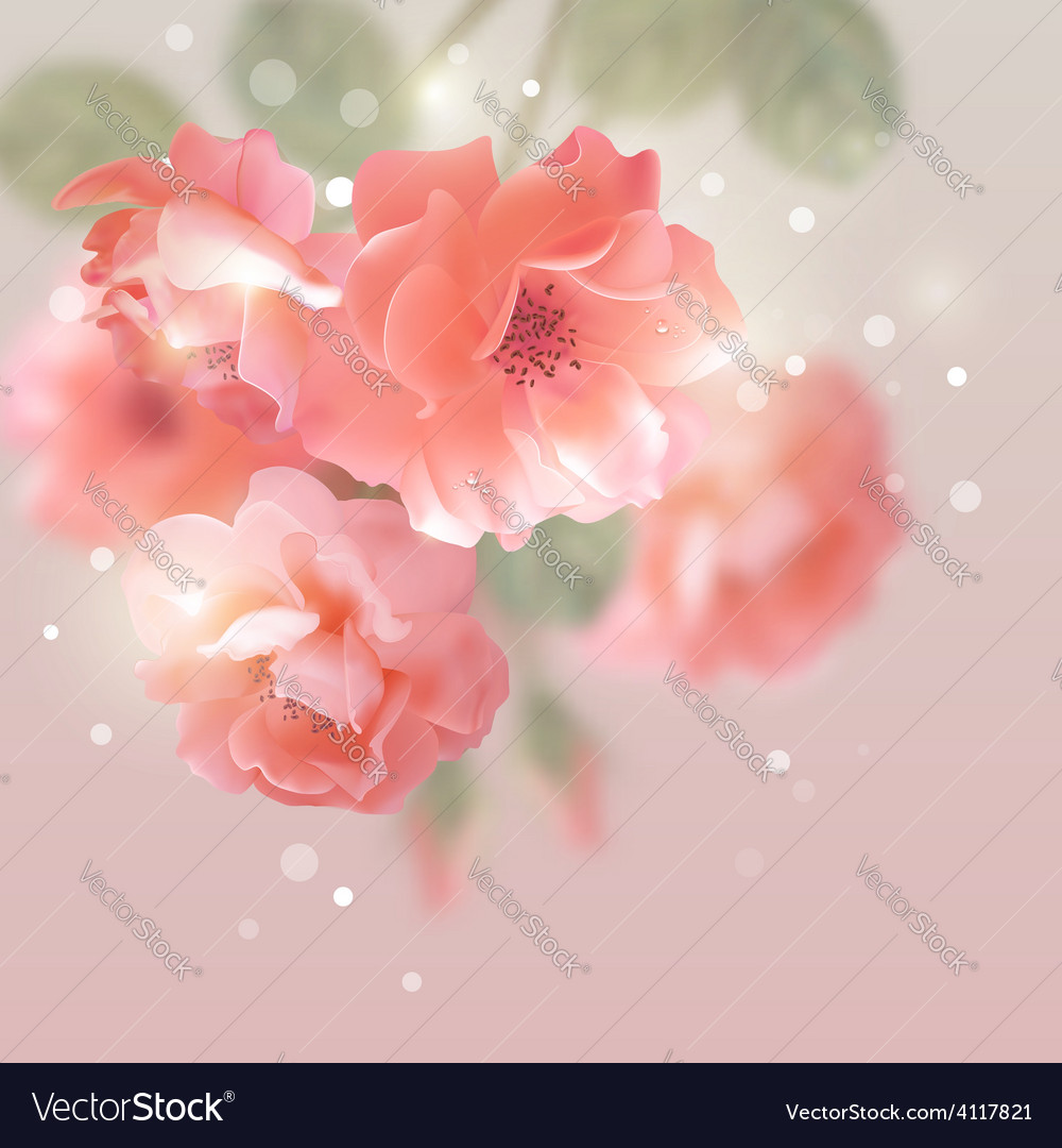 Shining flowers roses vector | Price: 3 Credit (USD $3)