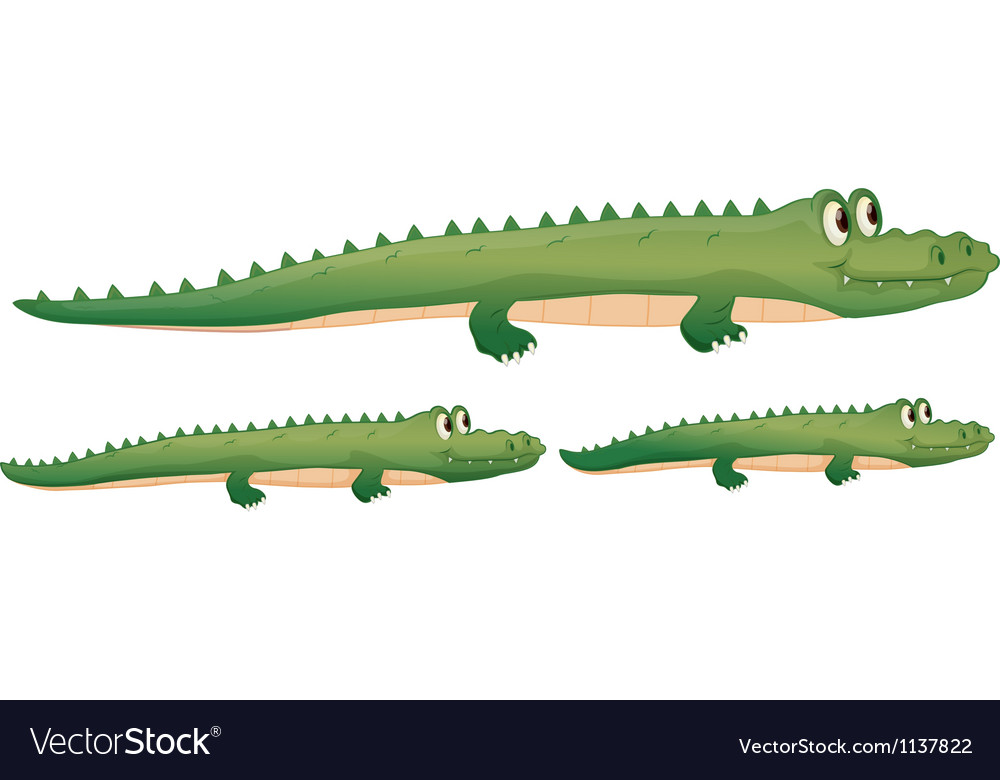 A crocodile vector | Price: 1 Credit (USD $1)