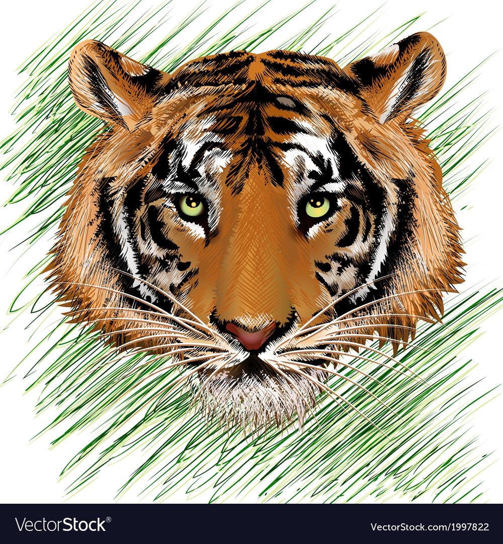 The tiger sketch vector | Price: 1 Credit (USD $1)