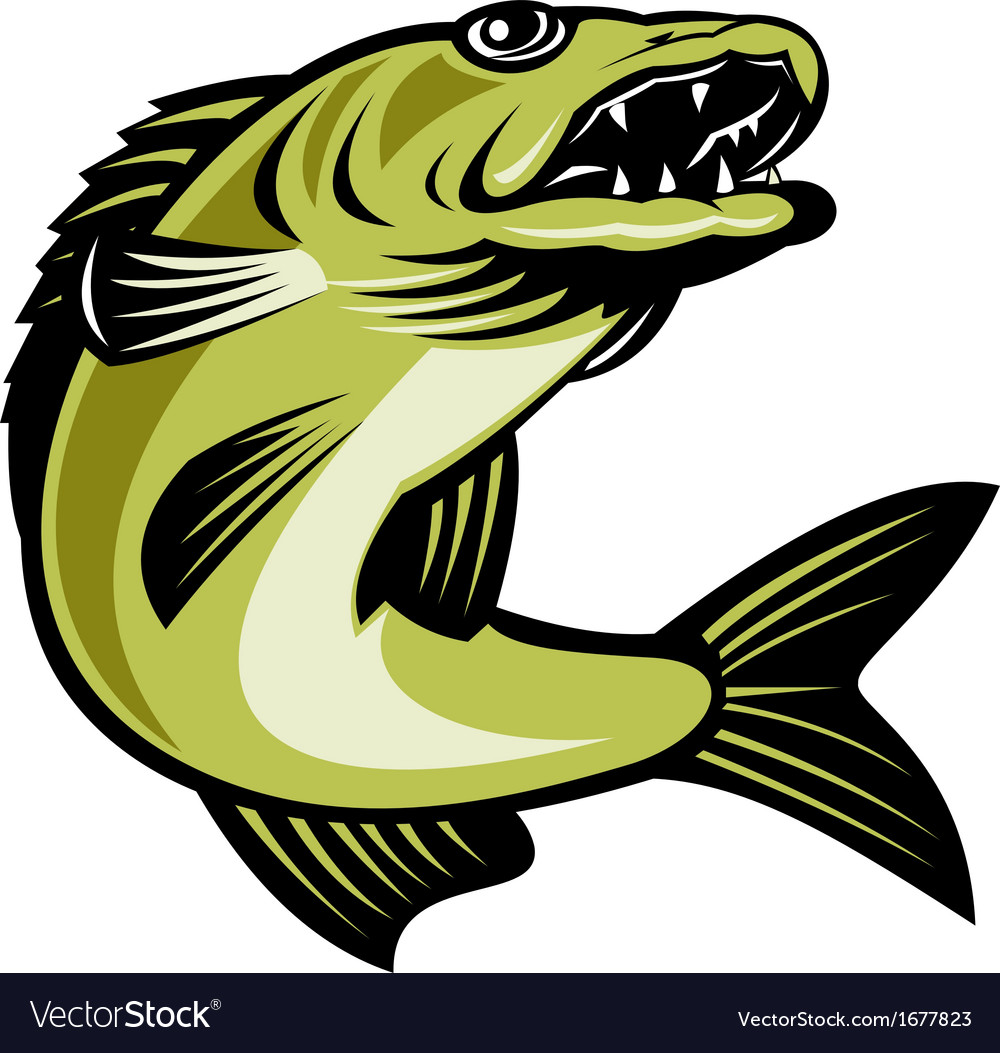 Walleye fish jumping vector | Price: 1 Credit (USD $1)