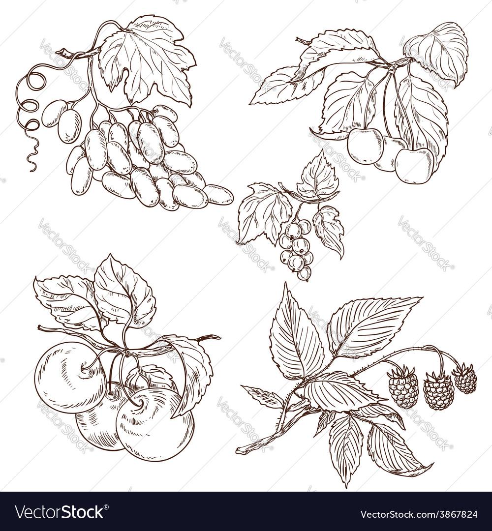 Fruit outline set vector | Price: 1 Credit (USD $1)