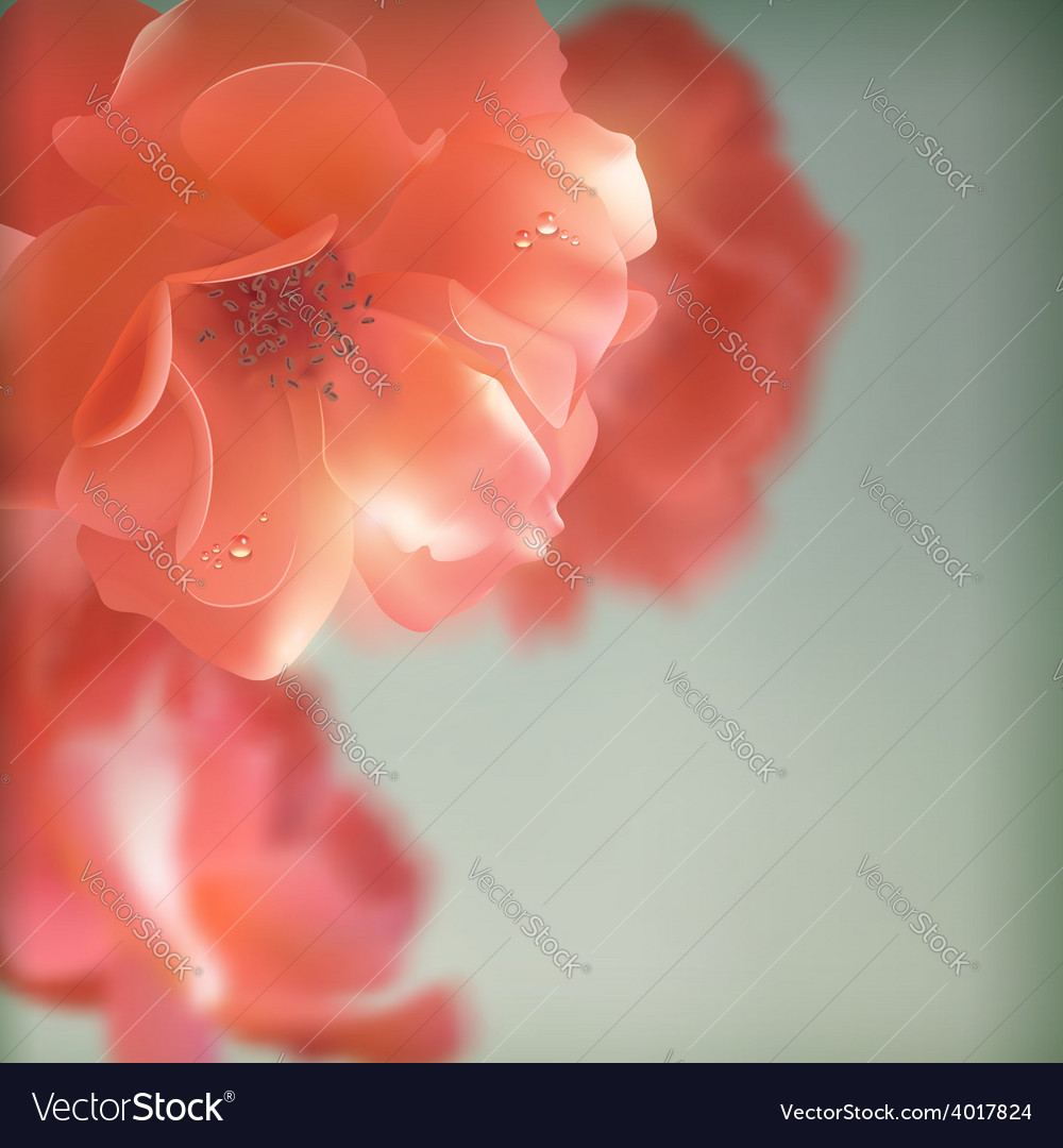Shining flowers roses vector
