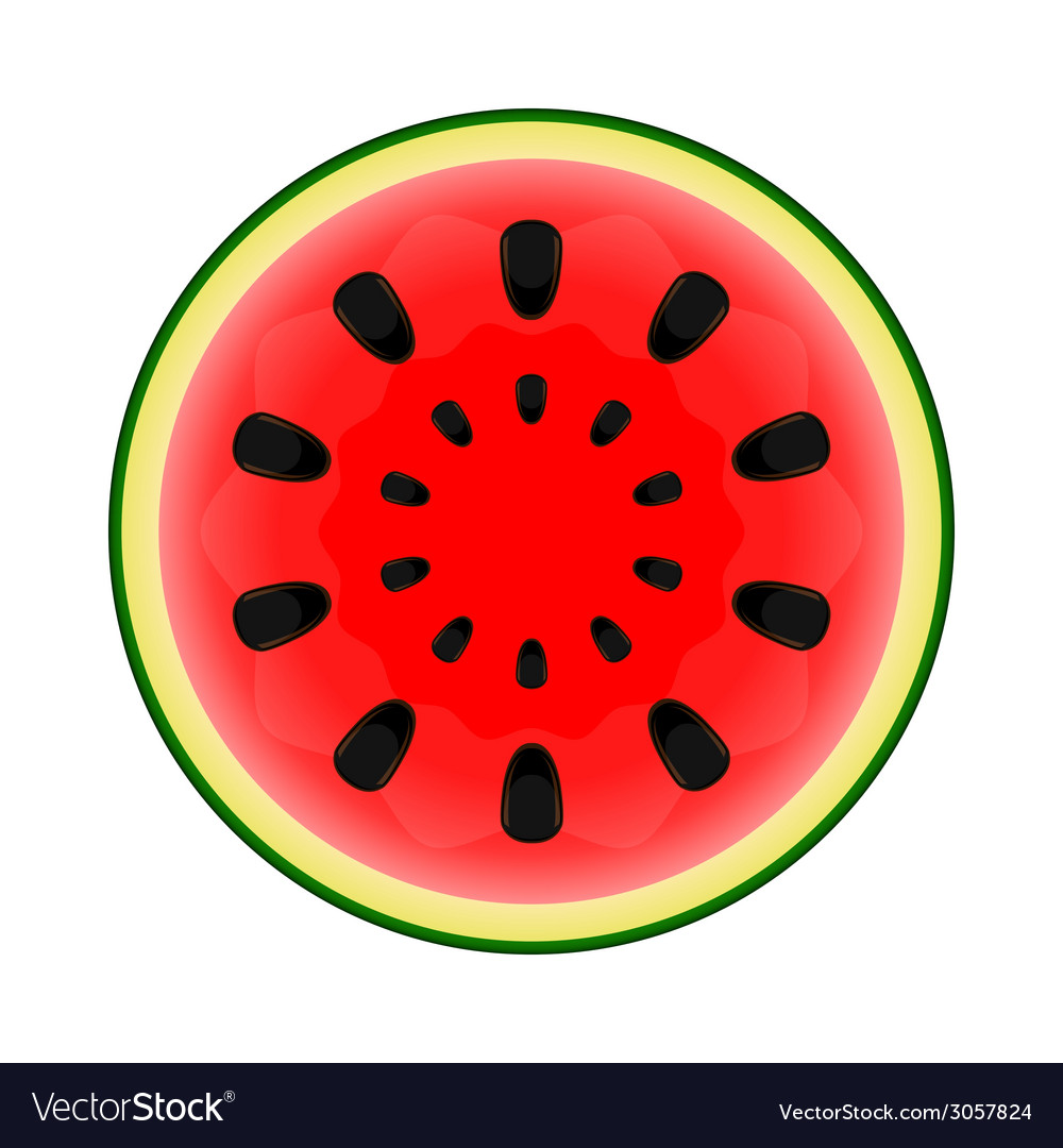 Watermelon on white background vector | Price: 1 Credit (USD $1)