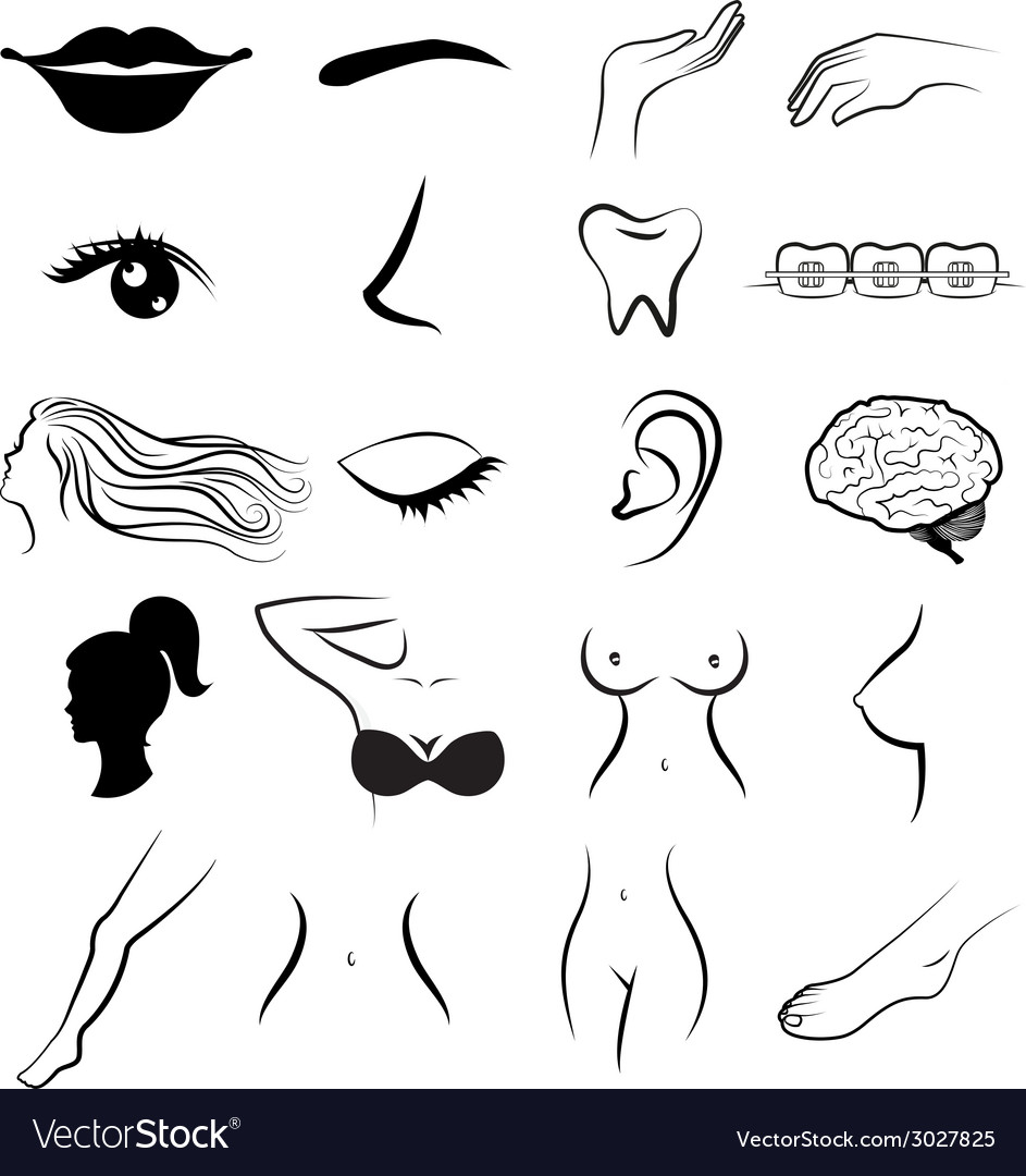Women body parts human vector | Price: 1 Credit (USD $1)