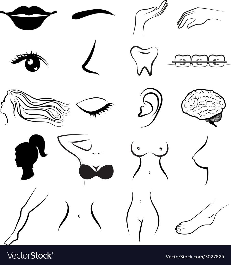 Women body parts human vector | Price: 1 Credit (USD $1)