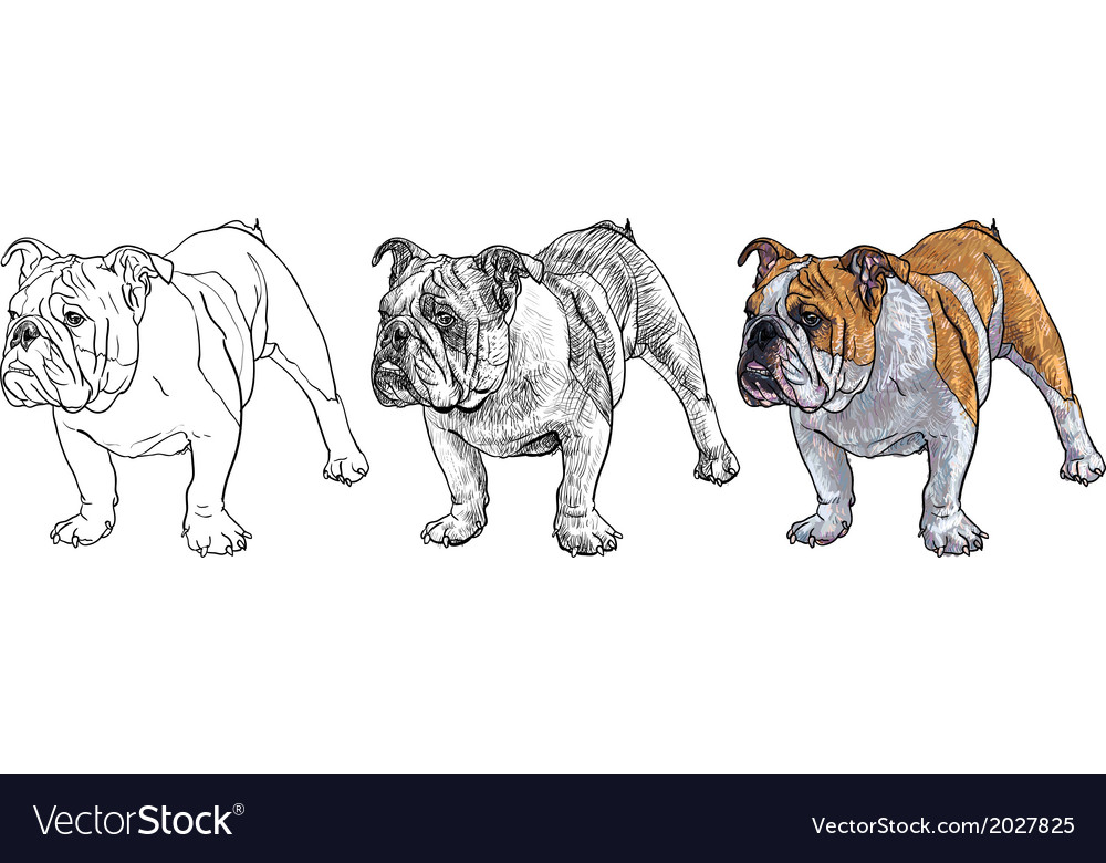 Young bulldog vector | Price: 1 Credit (USD $1)