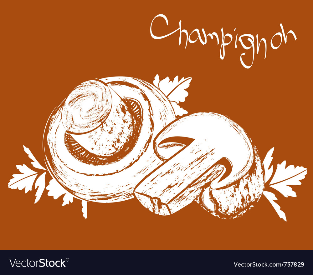 Champignons field mushrooms vector | Price: 1 Credit (USD $1)