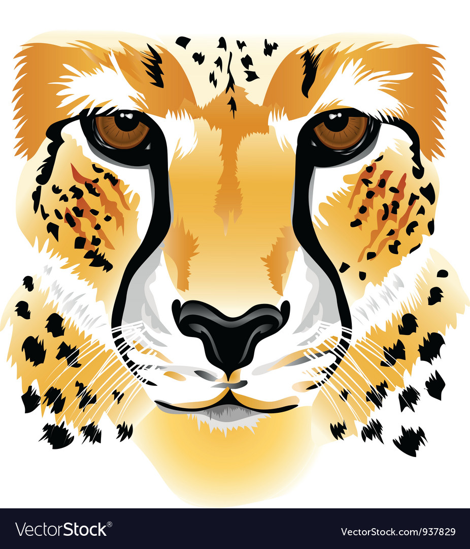 Cheetah face vector | Price: 1 Credit (USD $1)