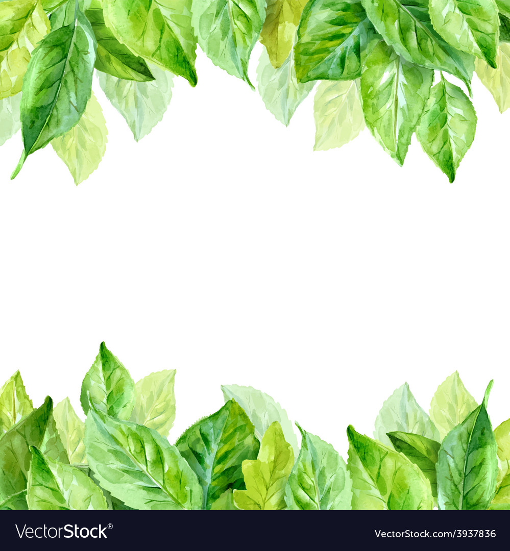 Spring leaves watercolor vector | Price: 1 Credit (USD $1)